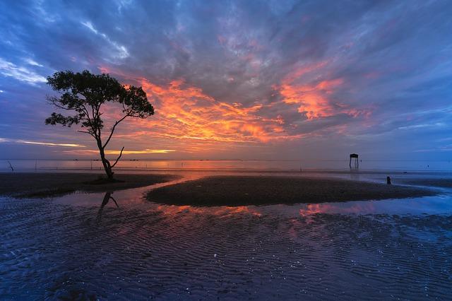 strom na pobřeží