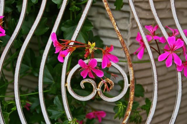 květiny u zábradlí.jpg